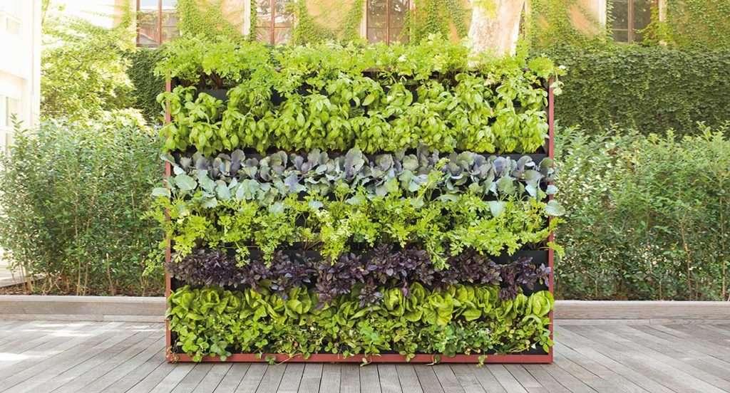 pareti d'erba verticali paola Lentii