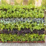Paola lenti – pareti d'erba verticale Greenery