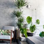 Arredare casa con le piante: idee e spunti.