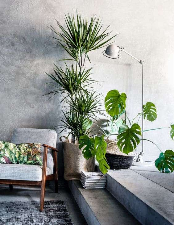 Top Arredare casa con le piante: idee e spunti | Fillyourhomewithlove KQ53