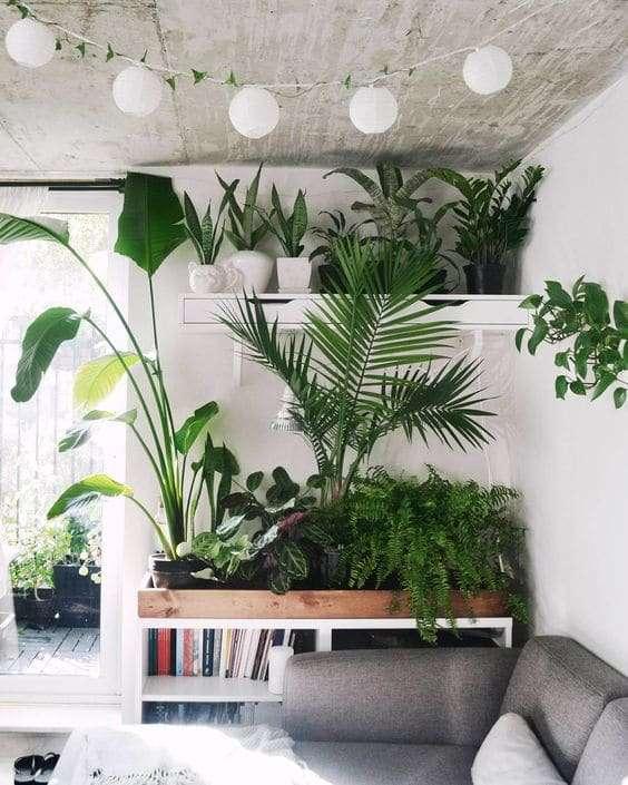 Piante In Casa Idee : Arredare casa con le piante idee e spunti