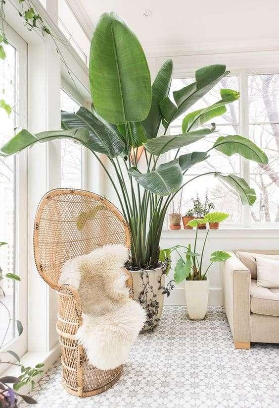 arredare casa con le piante idee e spunti