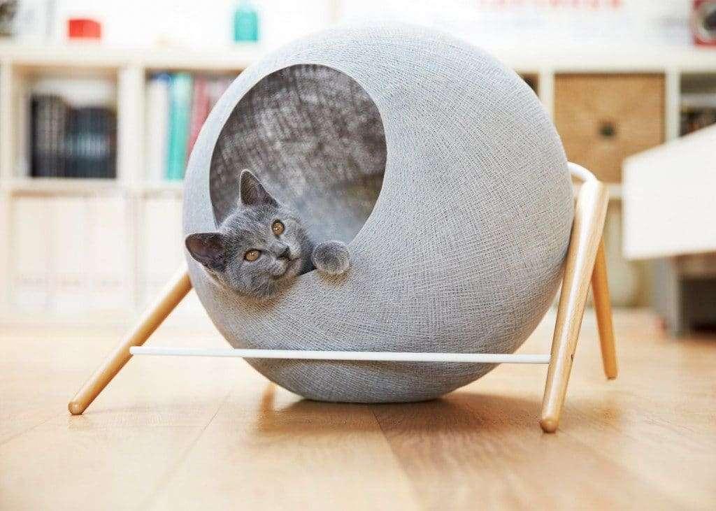 design per gatti cuccetta