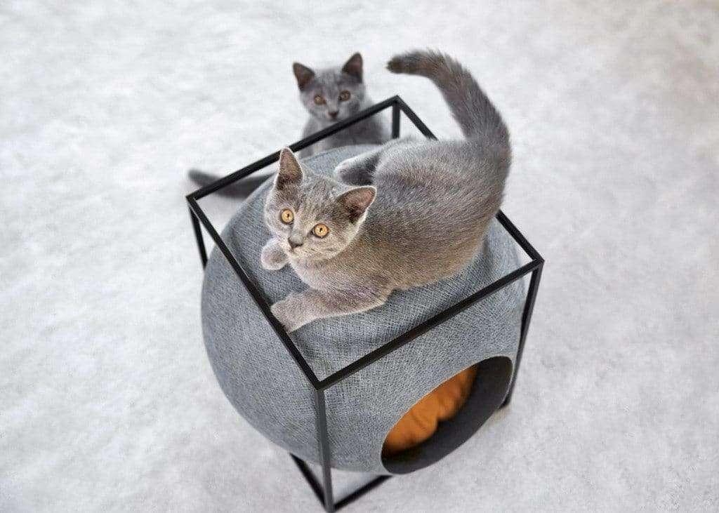 design per gatti