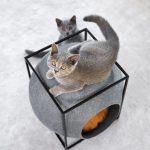 Design per gatti: tutti pazzi per i mici!