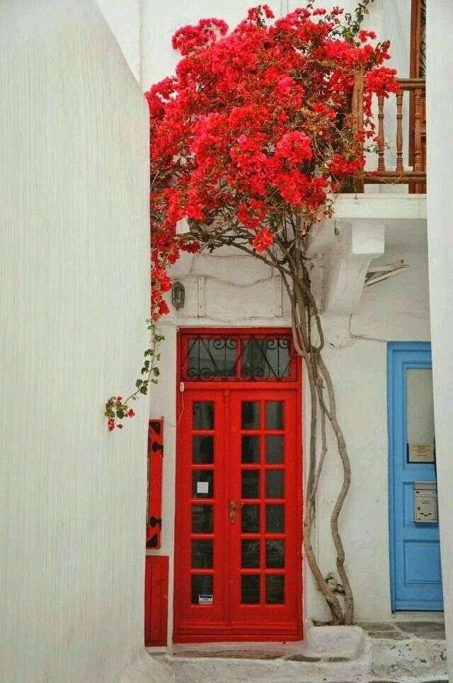 pianta per ingresso bougenville rossa