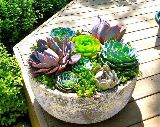 composizioni floreali con piante grasse